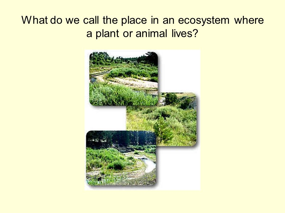 What do we call the place in an ecosystem where a plant or animal lives