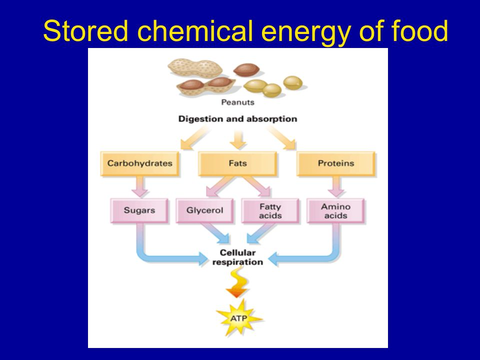 Stored chemical energy of food
