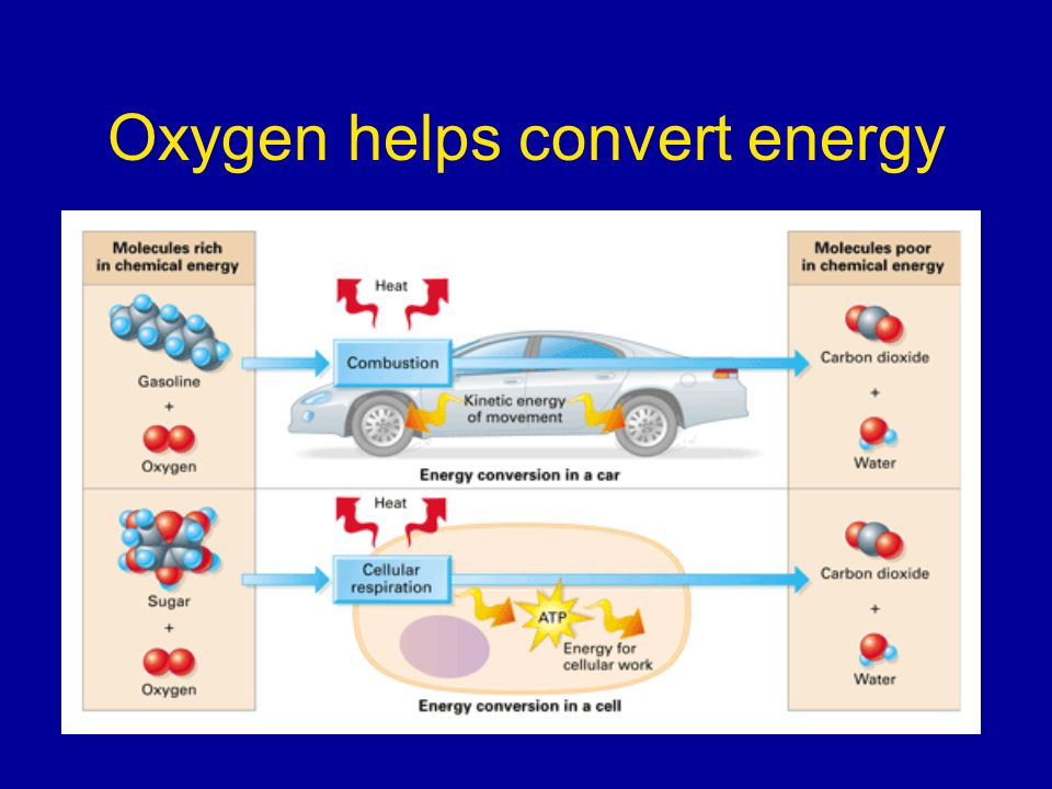 Oxygen helps convert energy