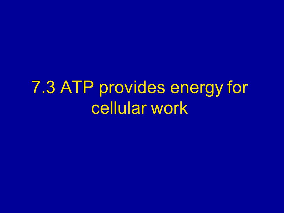 7.3 ATP provides energy for cellular work