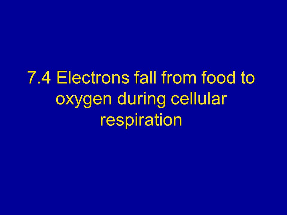 7.4 Electrons fall from food to oxygen during cellular respiration