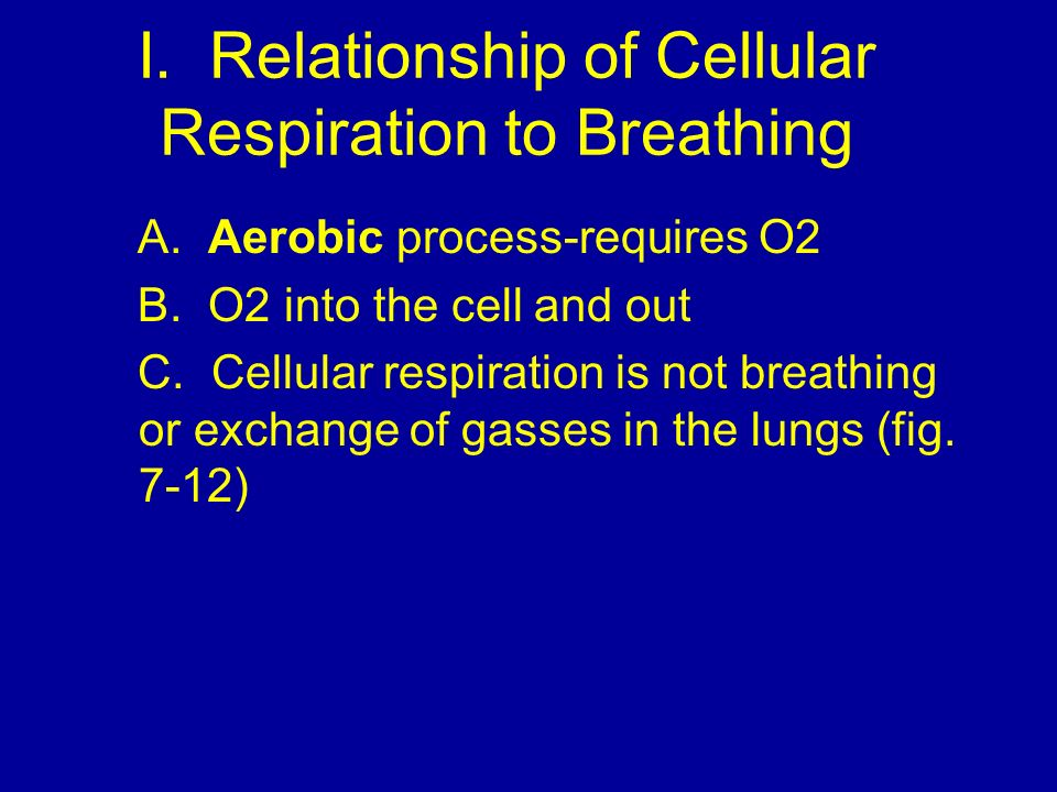 I. Relationship of Cellular Respiration to Breathing