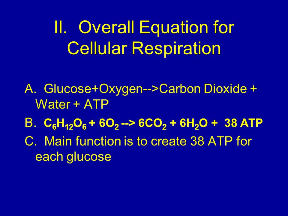 II. Overall Equation for Cellular Respiration