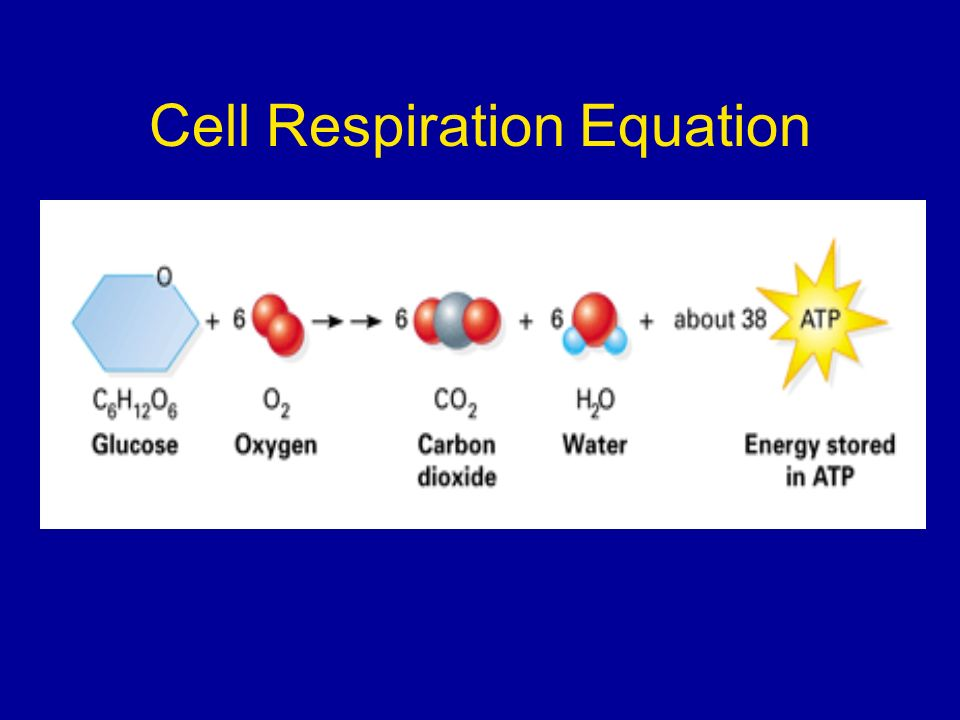 Cell Respiration Equation