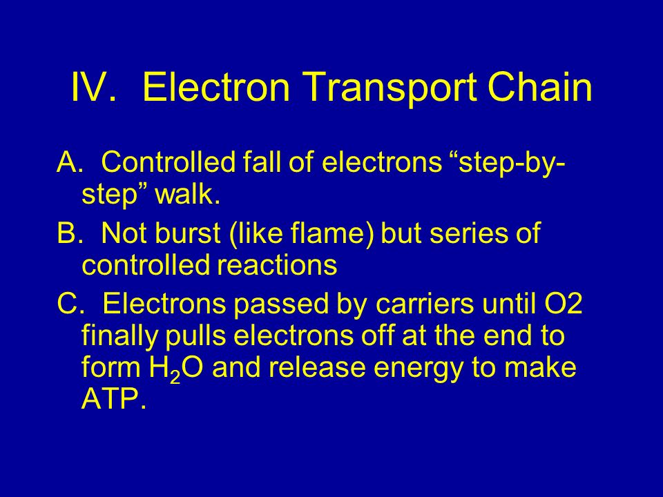 IV. Electron Transport Chain