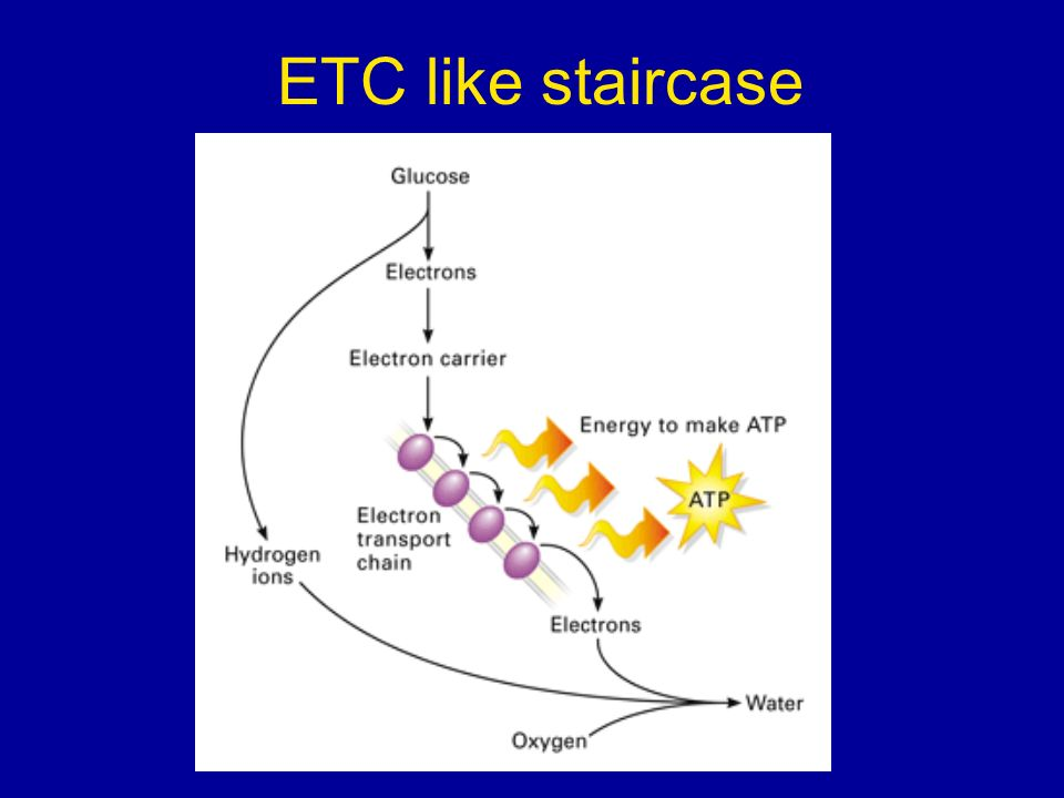ETC like staircase