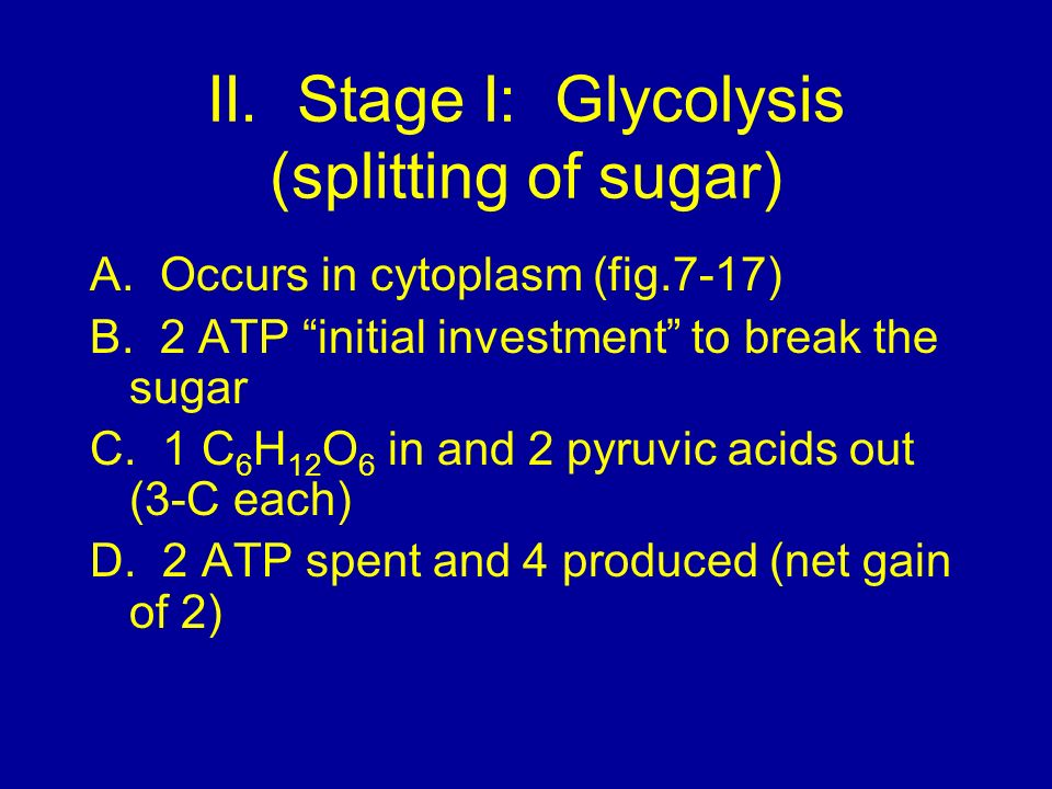 II. Stage I: Glycolysis (splitting of sugar)