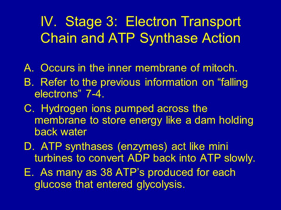 IV. Stage 3: Electron Transport Chain and ATP Synthase Action