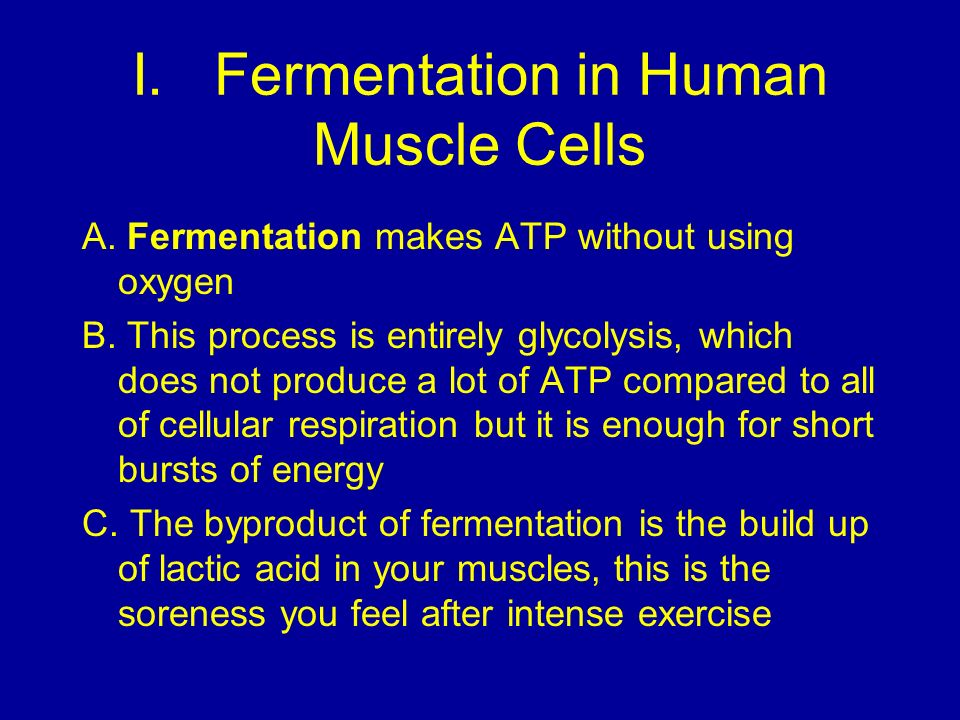 I. Fermentation in Human Muscle Cells