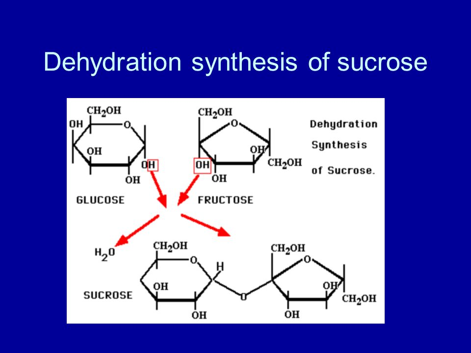 Dehydration synthesis of sucrose