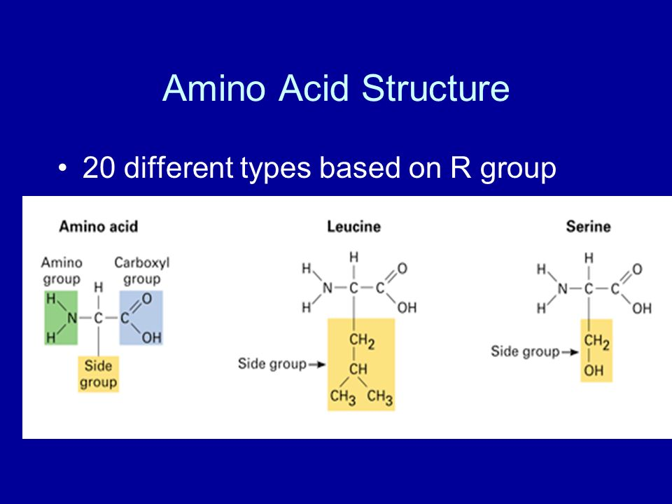 Amino Acid Structure 20 different types based on R group