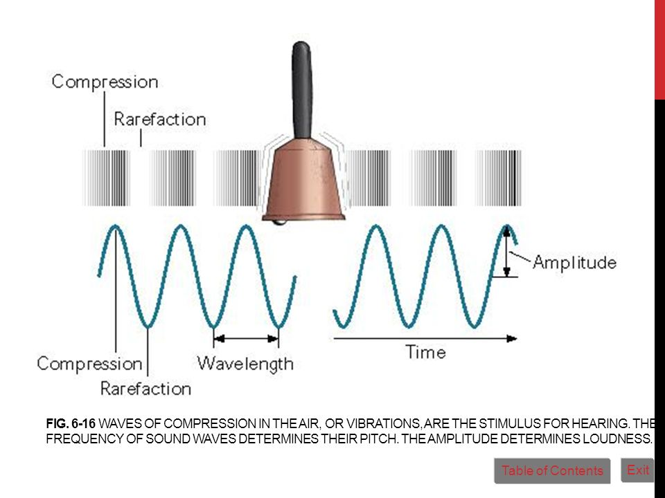 Fig. 6-16 Waves of compression in the air, or vibrations, are the stimulus for hearing. The frequency of sound waves determines their pitch. The amplitude determines loudness.