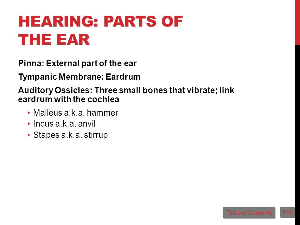 Hearing: Parts of the Ear