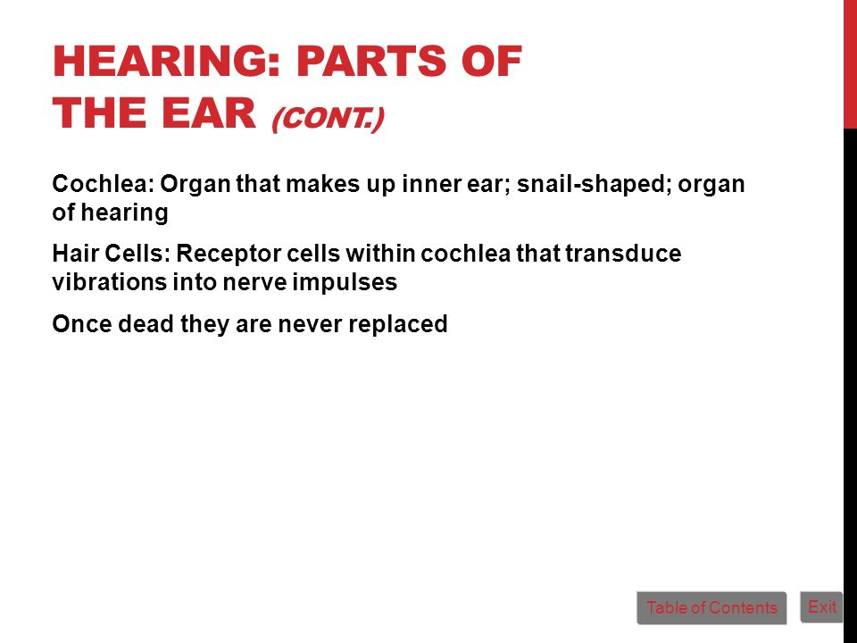 Hearing: Parts of the Ear (cont.)