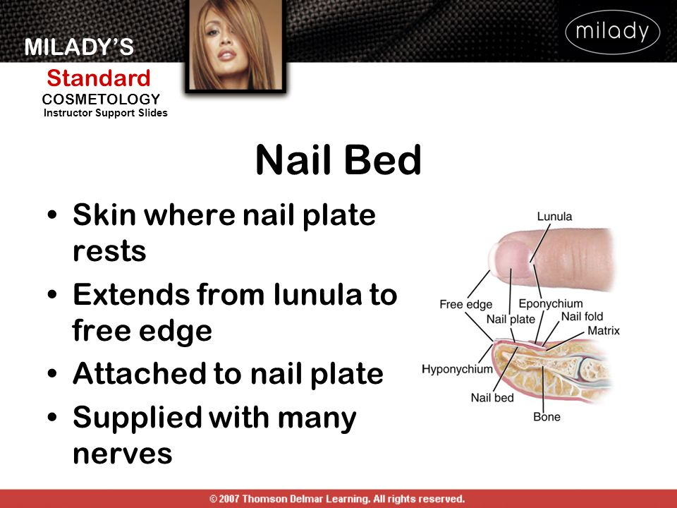 Nail Bed Skin where nail plate rests Extends from lunula to free edge