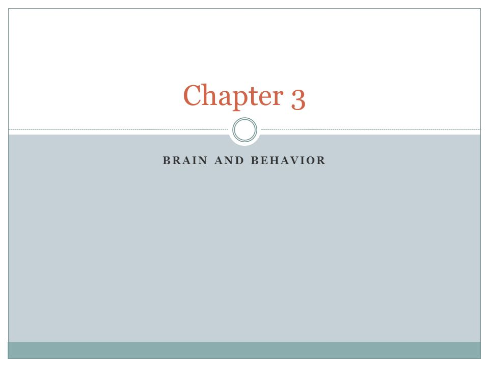 Chapter 3 Brain and Behavior