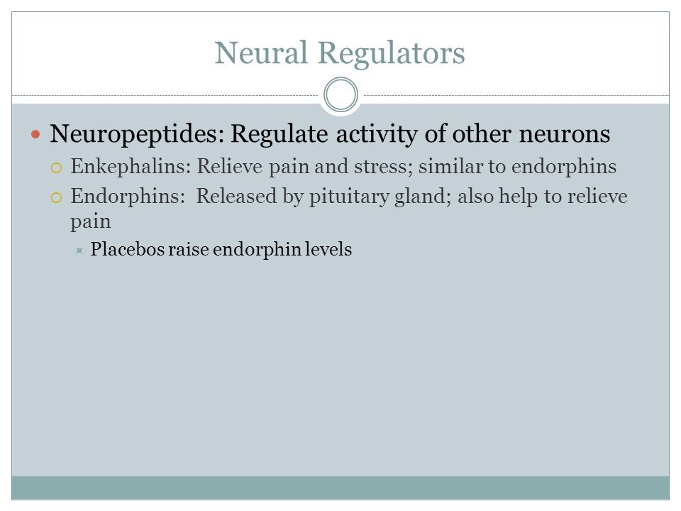 Neural Regulators Neuropeptides: Regulate activity of other neurons