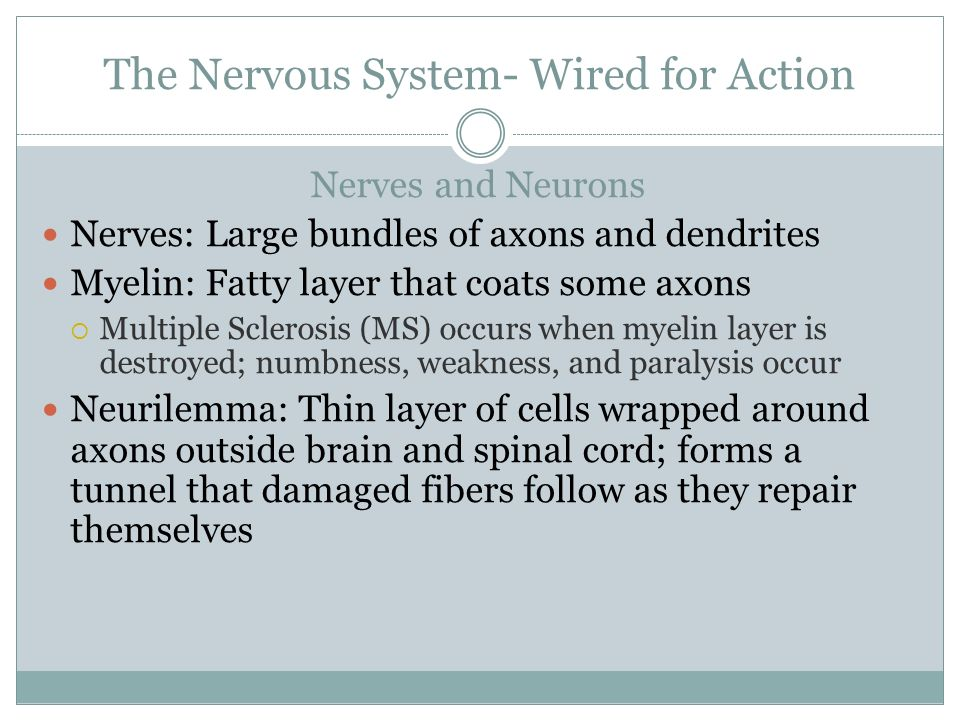 The Nervous System- Wired for Action