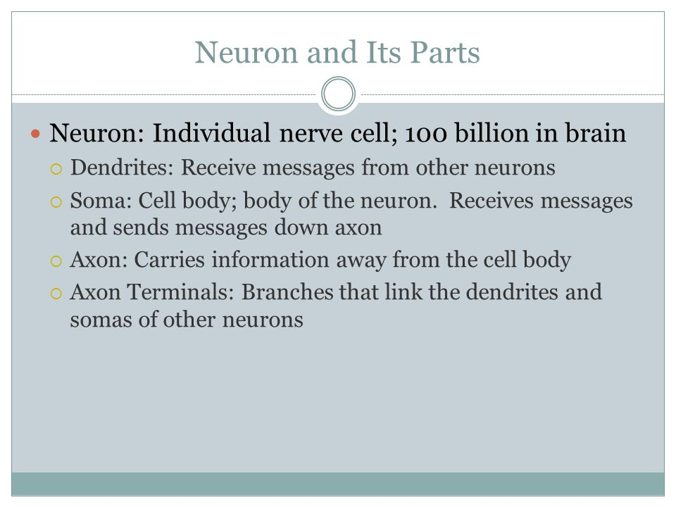 Neuron and Its Parts Neuron: Individual nerve cell; 100 billion in brain. Dendrites: Receive messages from other neurons.