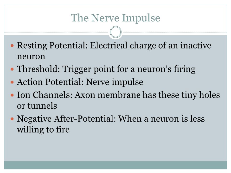 The Nerve Impulse Resting Potential: Electrical charge of an inactive neuron. Threshold: Trigger point for a neuron's firing.