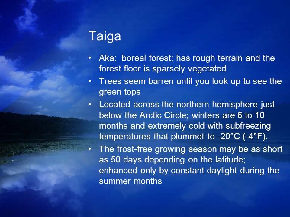 Taiga Aka: boreal forest; has rough terrain and the forest floor is sparsely vegetated. Trees seem barren until you look up to see the green tops.