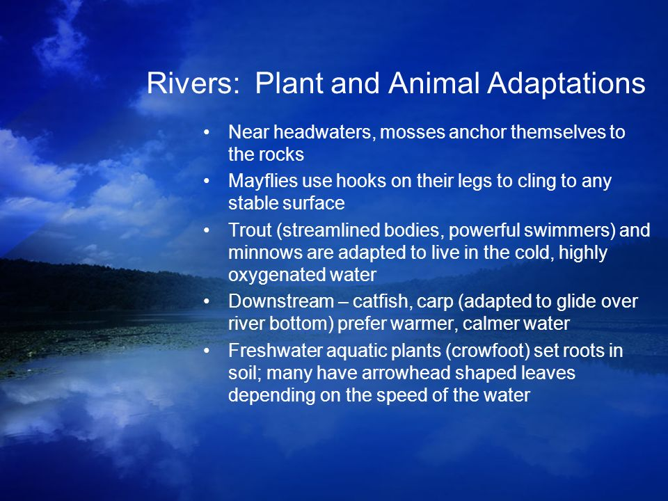 Rivers: Plant and Animal Adaptations
