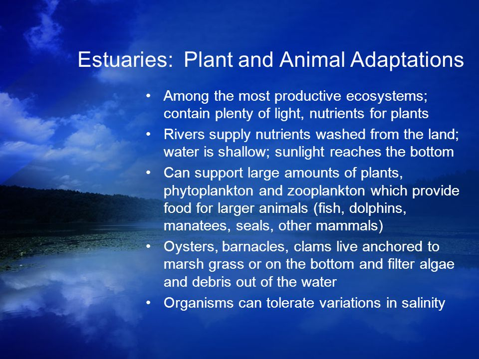 Estuaries: Plant and Animal Adaptations