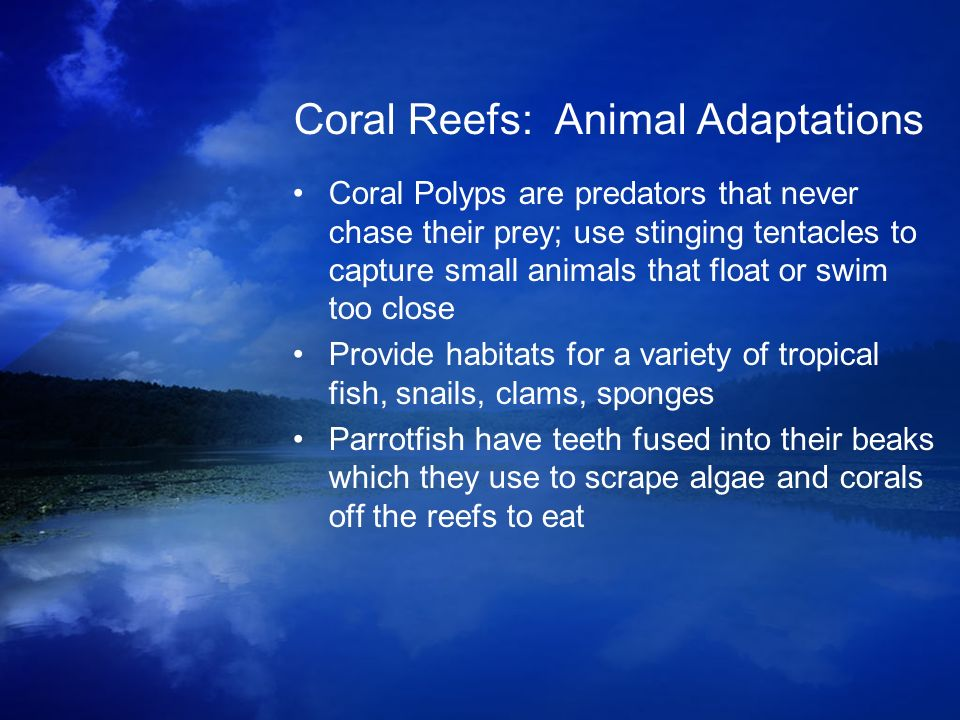 Coral Reefs: Animal Adaptations