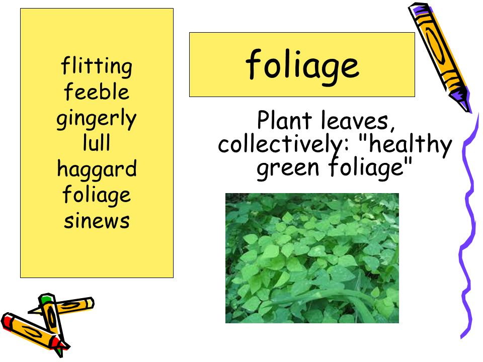 Plant leaves, collectively: healthy green foliage
