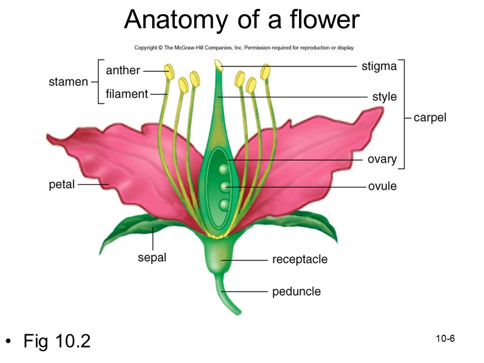 Chapter 10 Plant Reproduction Ppt Download