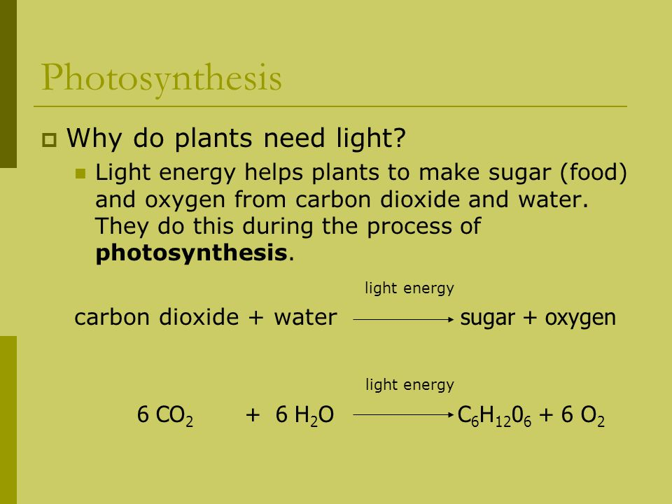 Photosynthesis Why do plants need light