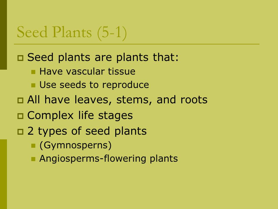 Seed Plants (5-1) Seed plants are plants that: