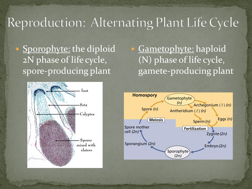 PLANTS Structures Functions Ppt Video Online Download