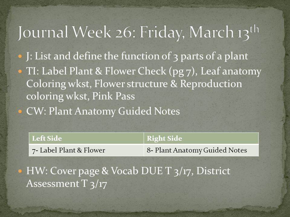 PLANTS: Structures & Functions - ppt video online download