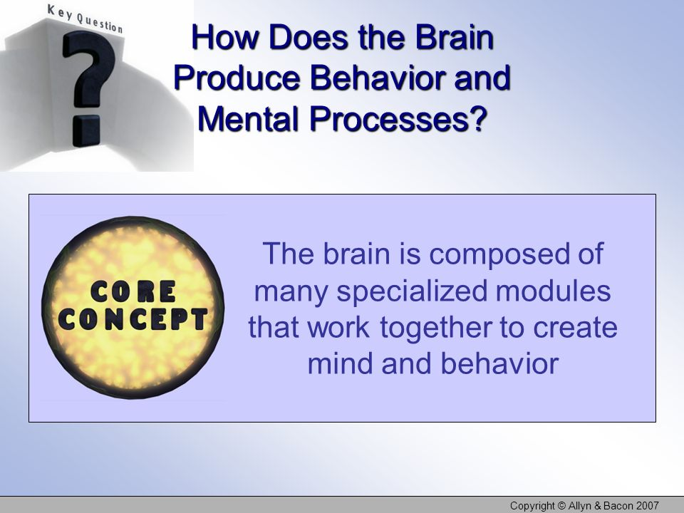 How Does the Brain Produce Behavior and Mental Processes