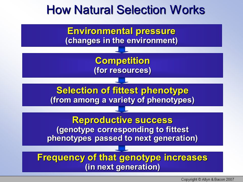 How Natural Selection Works