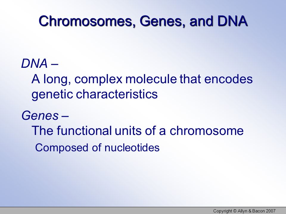 Chromosomes, Genes, and DNA