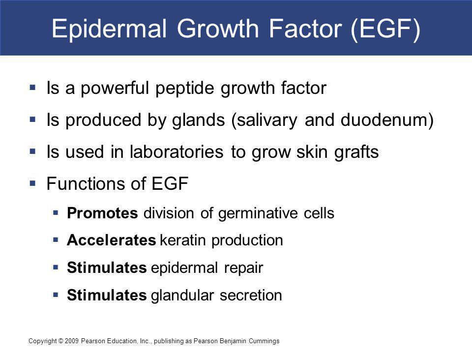 Epidermal Growth Factor (EGF)