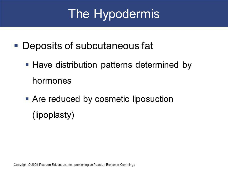 The Hypodermis Deposits of subcutaneous fat