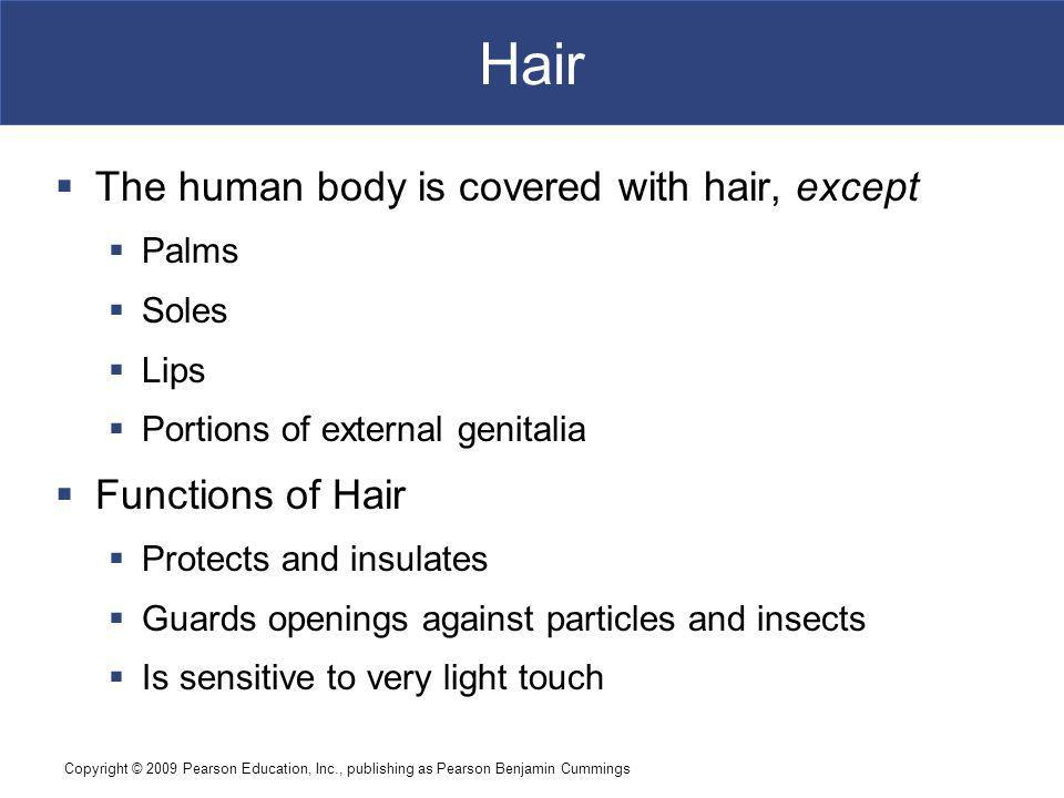 Hair The human body is covered with hair, except Functions of Hair