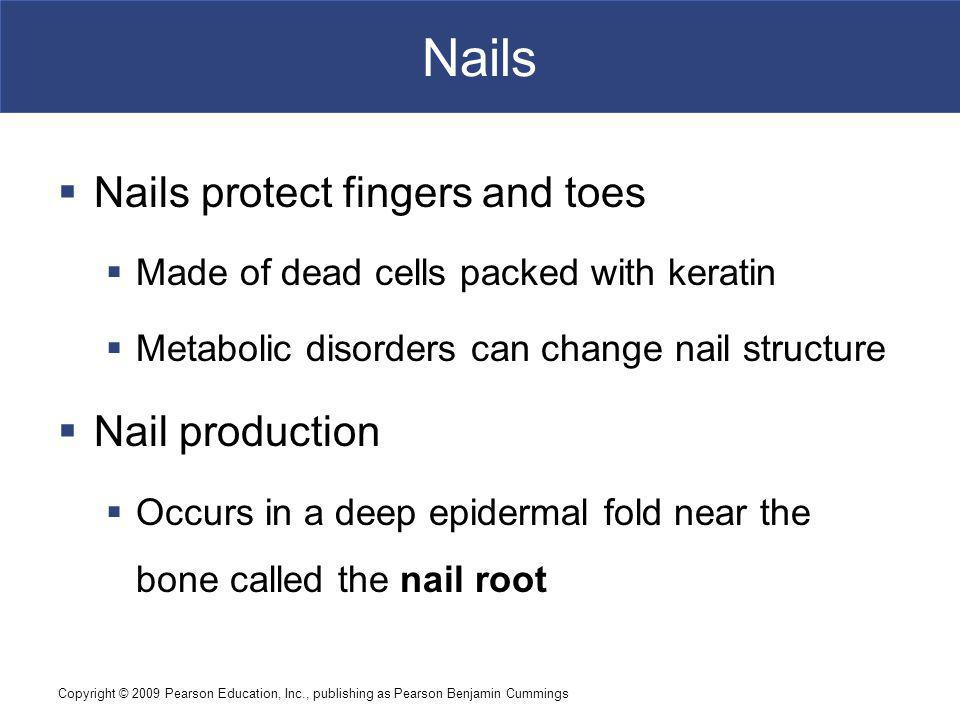 Nails Nails protect fingers and toes Nail production