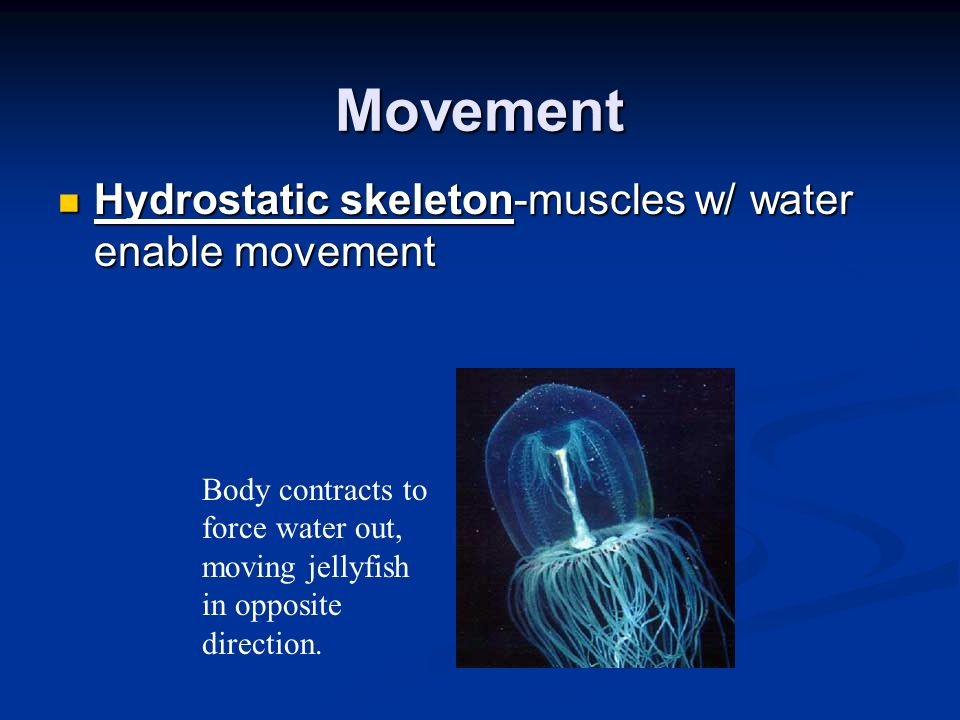 Movement Hydrostatic skeleton-muscles w/ water enable movement