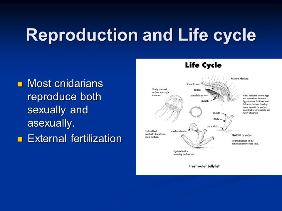 Reproduction and Life cycle