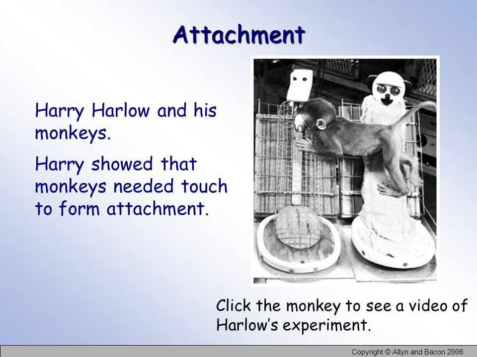 Attachment Harry Harlow and his monkeys. Harry showed that monkeys needed touch to form attachment.
