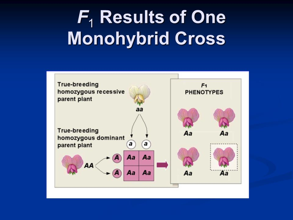 F1 Results of One Monohybrid Cross