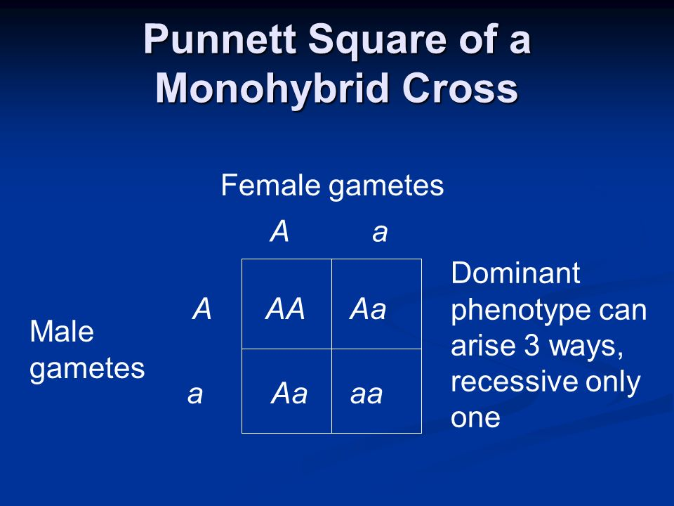 Punnett Square of a Monohybrid Cross