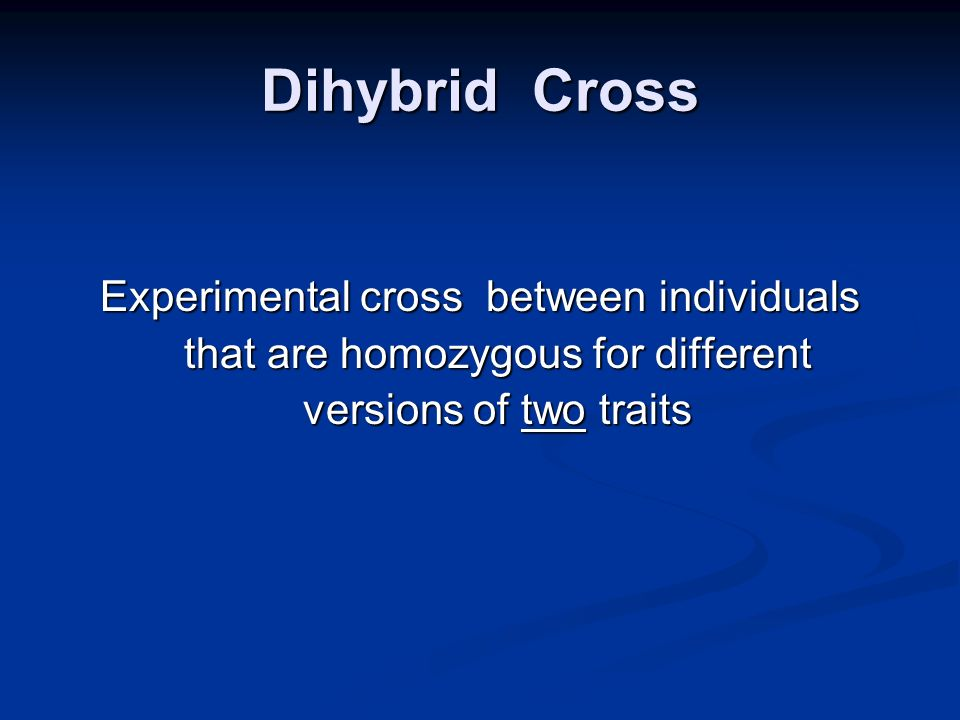 Dihybrid Cross Experimental cross between individuals that are homozygous for different versions of two traits.