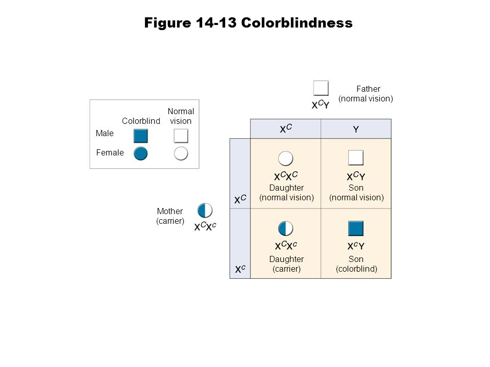 Figure 14-13 Colorblindness