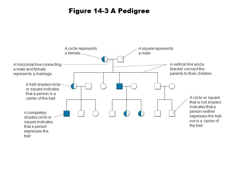 Figure 14-3 A Pedigree A circle represents a female.