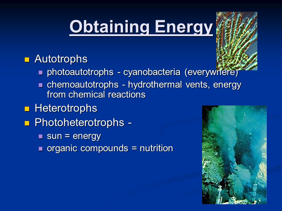 Obtaining Energy Autotrophs Heterotrophs Photoheterotrophs -